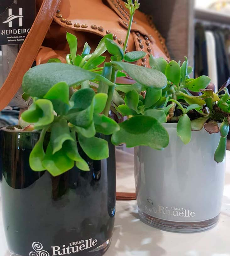 DIY Plant Pots: Upcycling Your Old Candle Vessels